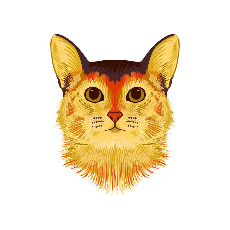 Портрет вектора иллюстративный абиссинского кота Эскиз руки вычерченный, милая порода отечественного короткого с волосами кота иллюстрация штока