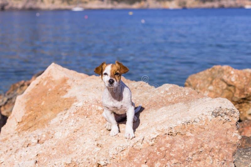 портрет взгляда сверху красивой милой небольшой собаки на пляже Сидеть на утесах и смотреть камеру Заход солнца и лето стоковые фото