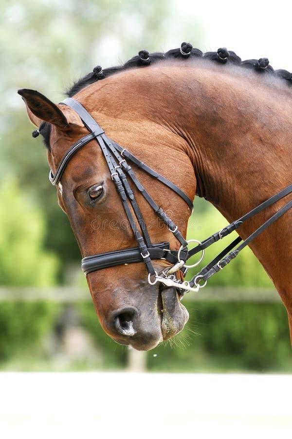 Портрет взгляда со стороны лошади dressage залива во время тренировки переплюнет стоковое фото rf