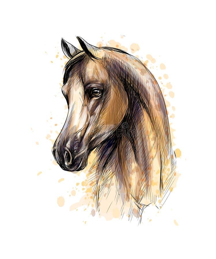 Портрет головы лошади от выплеска акварелей Эскиз нарисованный рукой иллюстрация вектора