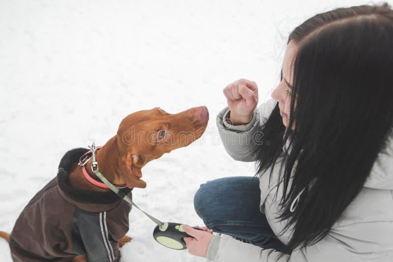 Портрет девушки в теплых одеждах и коричневой собаке одетой в куртке сидит на снеге и игре с владельцем стоковая фотография rf