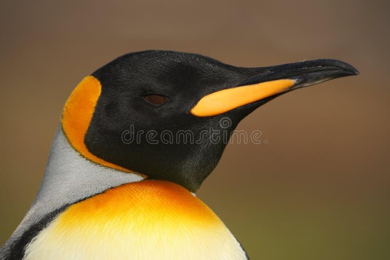 Портрет детали пингвина короля стоковые фотографии rf