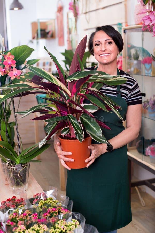 Портрет женского флориста аранжируя цветок calathea стоковая фотография