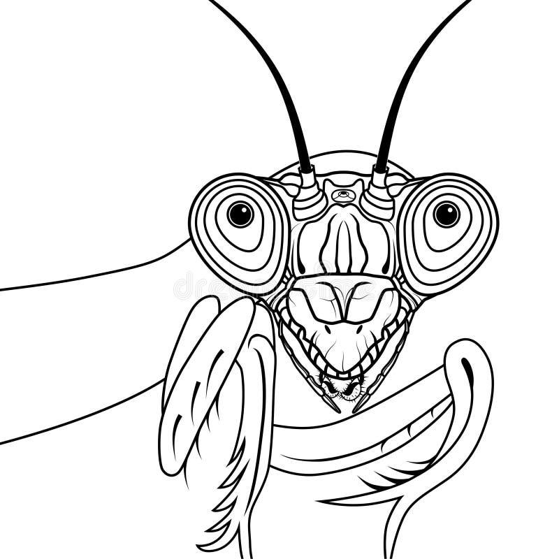 Портрет зеленого символа дизайна футболки татуировки иллюстрации вектора богомола для дизайна талисмана или эмблемы, дизайна эски иллюстрация штока