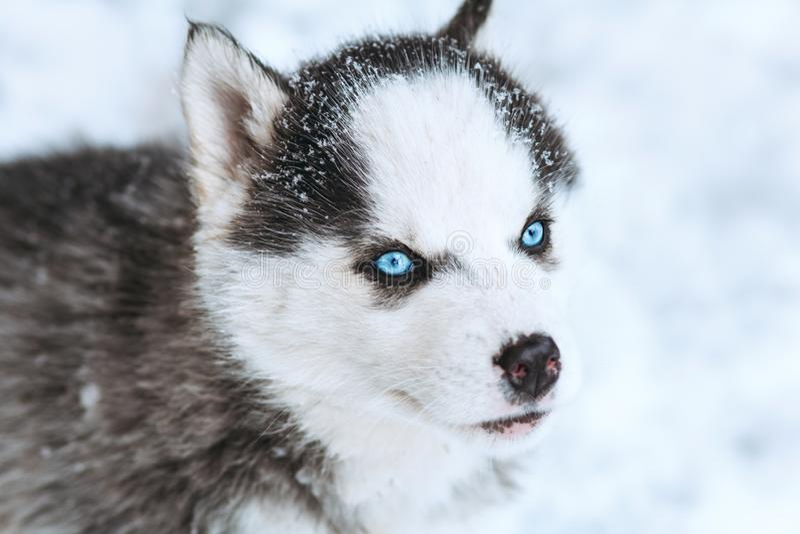 портрет зимы милого осиплого щенка против снежной предпосылки природы стоковые фото