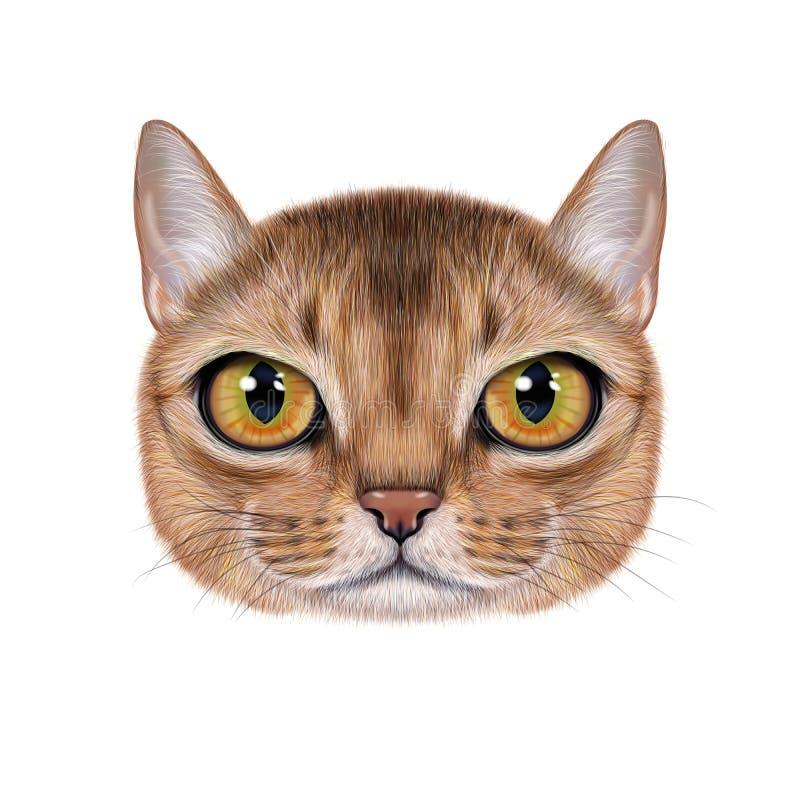 Портрет иллюстрации абиссинского кота иллюстрация вектора