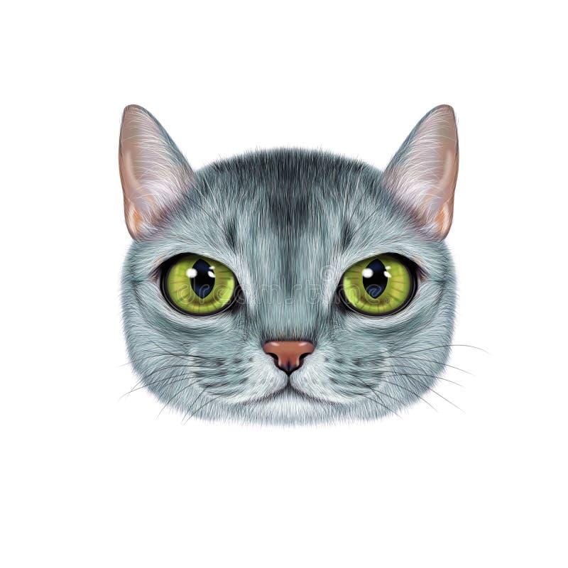 Портрет иллюстрации абиссинского кота иллюстрация штока