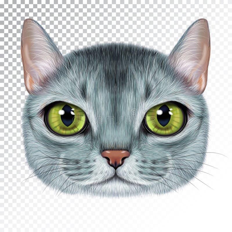 Портрет иллюстрации вектора абиссинского кота иллюстрация вектора