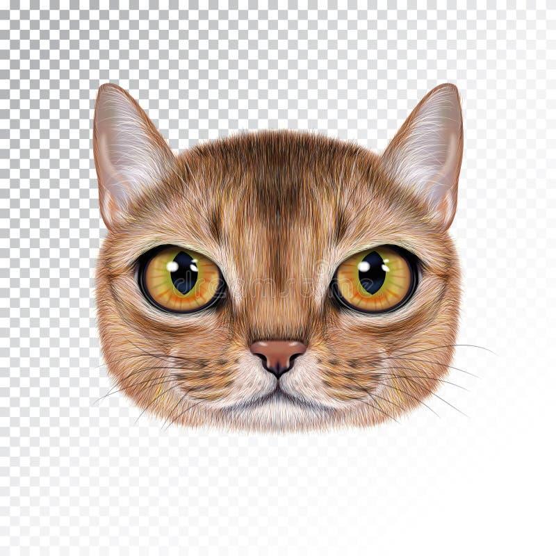 Портрет иллюстрации вектора абиссинского кота иллюстрация штока