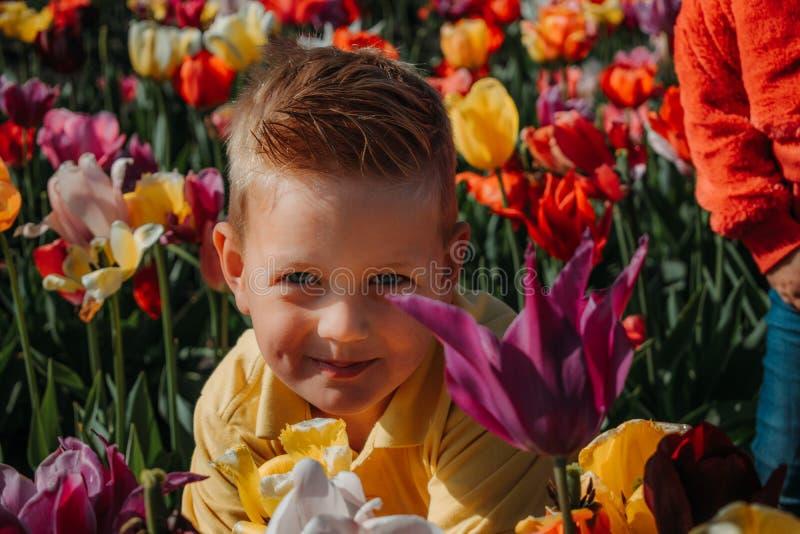 Портрет кавказского мальчика в красочном поле в Нидерланд, Голландии тюльпана стоковое изображение rf