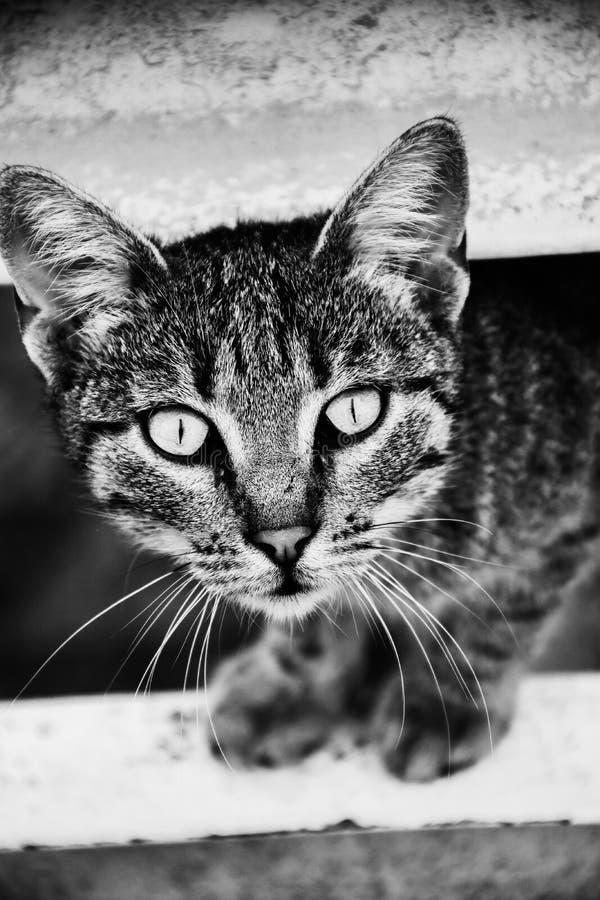Портрет конца-вверх кота дома стоковые фотографии rf