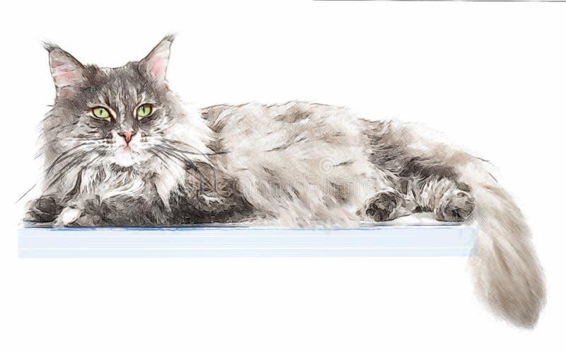 Портрет кота енота Мейна на коробке, изолированный на белой предпосылке стоковое фото rf