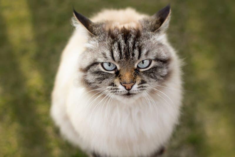 Портрет кота смотря вверх с, эмоции животных стоковые фото