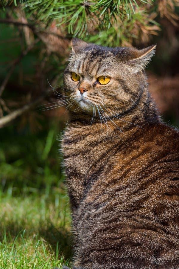 Портрет кота outdoors стоковое изображение
