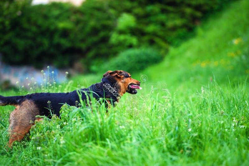 портрет красивой собаки стоковое фото rf