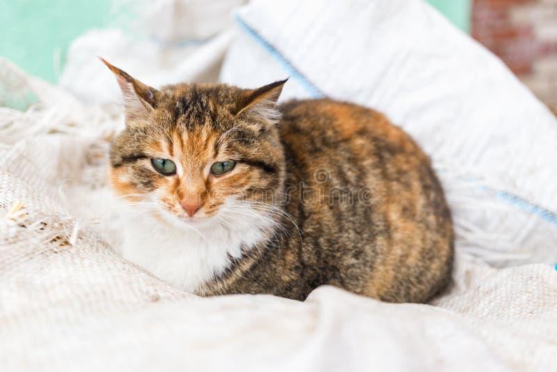 Портрет красного сельского кота стоковые изображения