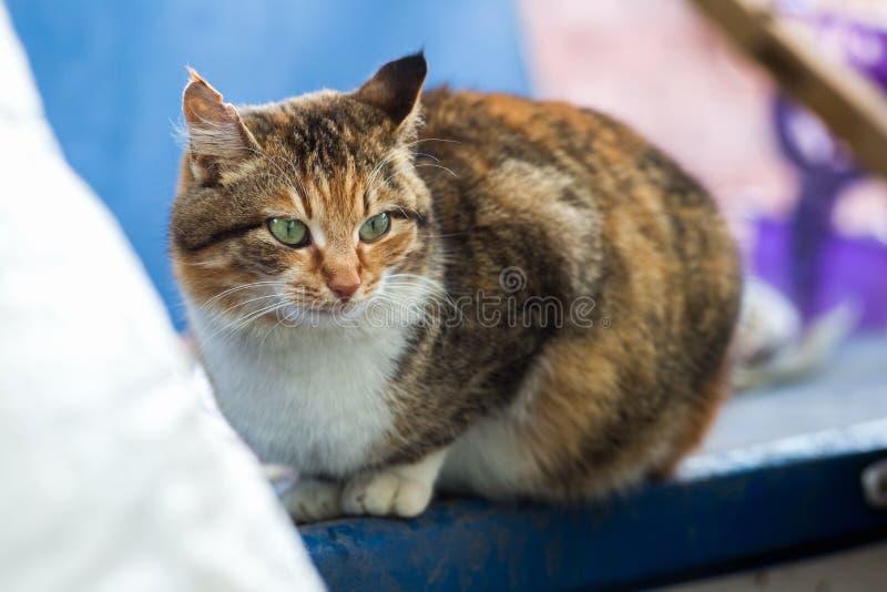 Портрет красного сельского кота стоковые изображения rf