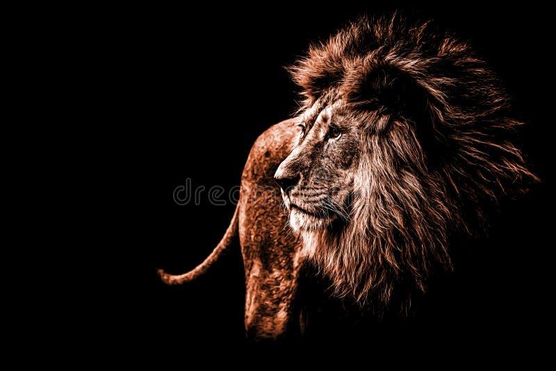 Портрет льва в темноте - оранжевых цветах стоковые фотографии rf