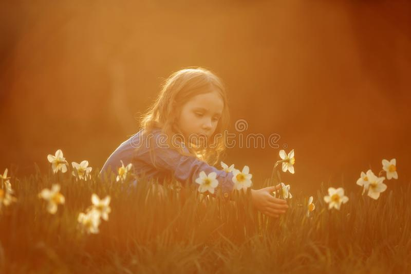 Портрет маленькой девочки на открытом воздухе около цветков narcissus на заходе солнца стоковая фотография rf
