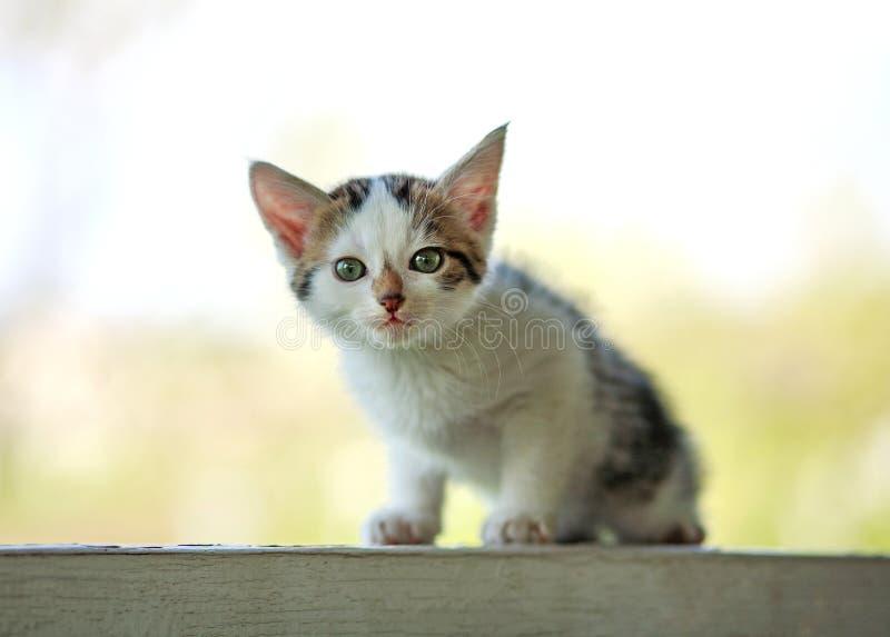 Портрет малого милого котенка на белизне outdoors стоковая фотография rf