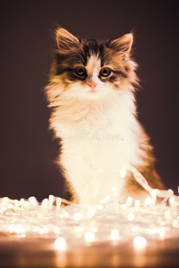 Портрет малого сонного котенка в гирляндах освещает стоковая фотография rf