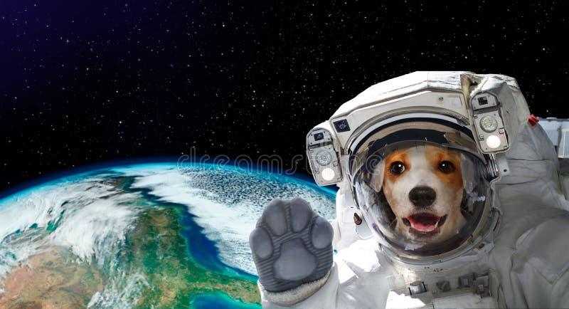 Портрет милого астронавта собаки в космосе на предпосылке глобуса стоковое изображение