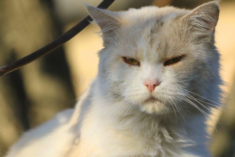 Портрет милого бежевого кота запачканная предпосылка стоковые изображения rf