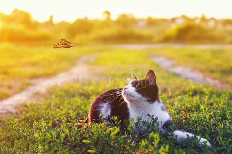 Портрет милого котенка лежа в траве в солнечном луге и смотря красивую стоковая фотография
