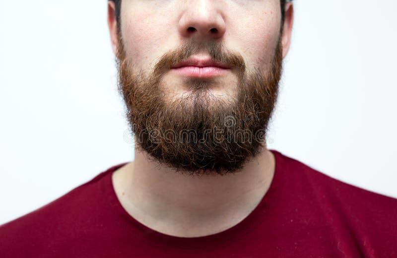 Портрет, мужчина с грязно-коричневой оранжевой бородой, усы и грязные волосы Медвежий хипстер на изолированном белом стоковая фотография rf