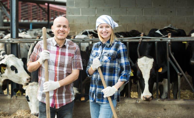 Портрет 2 наемных сельскохозяйственных рабочих приближает к амбару коров стоковое изображение