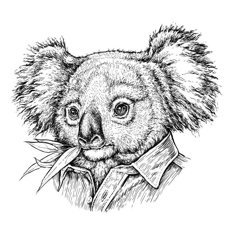 Портрет нарисованный рукой медведя коалы Иллюстрация вектора изолированная на белизне бесплатная иллюстрация