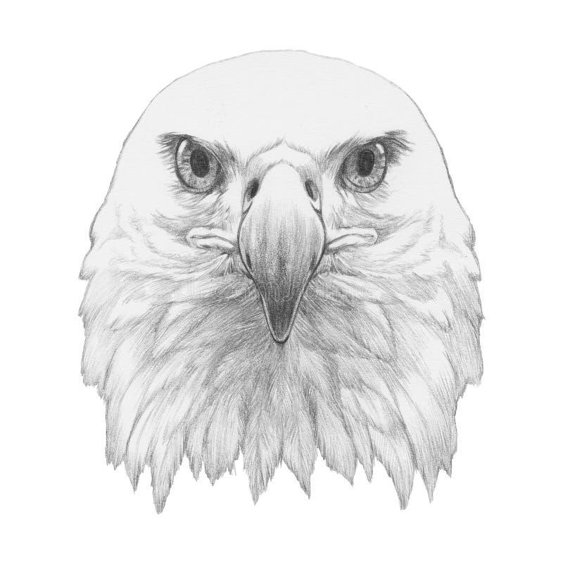 Портрет орла иллюстрация вектора