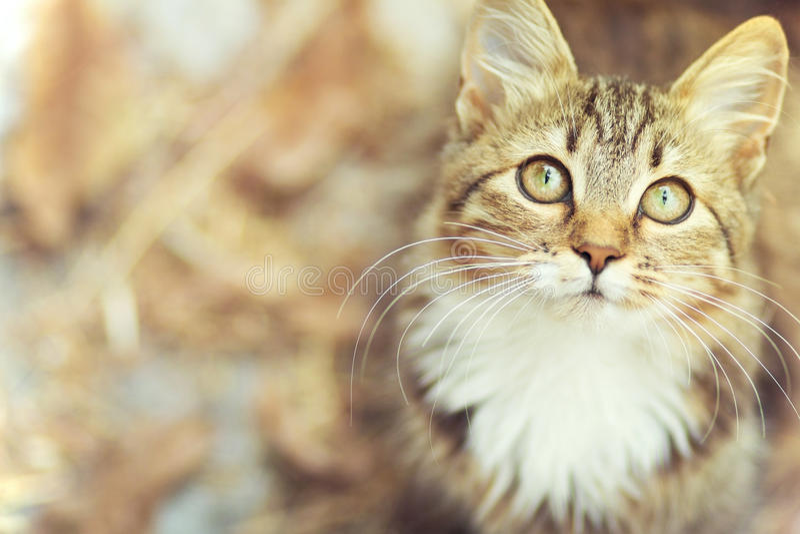 Портрет осени милой киски стоковая фотография