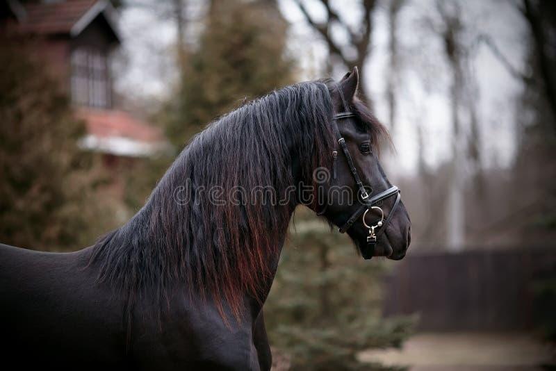Портрет лошади спорт черной. стоковая фотография rf