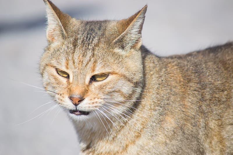 Портрет одичалого кота стоковые фото
