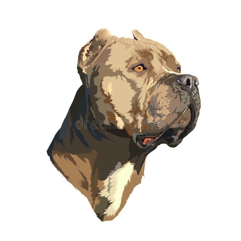 Портрет питбуля бесплатная иллюстрация