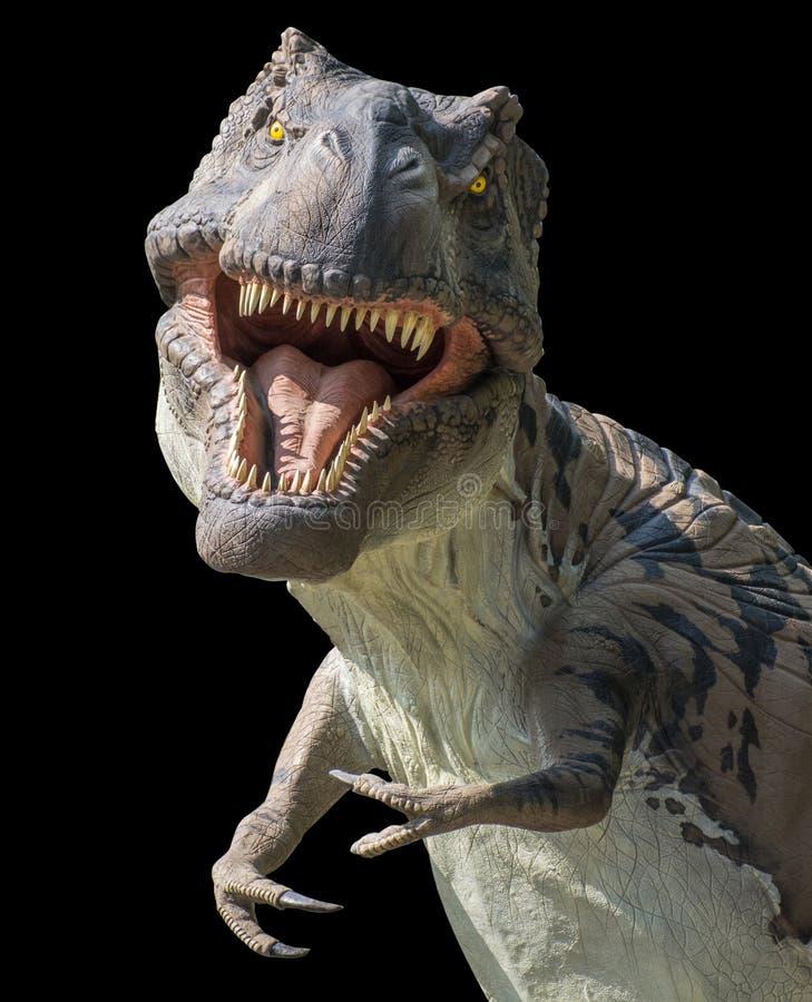 Портрет предпосылки onblack rex тиранозавра стоковые изображения