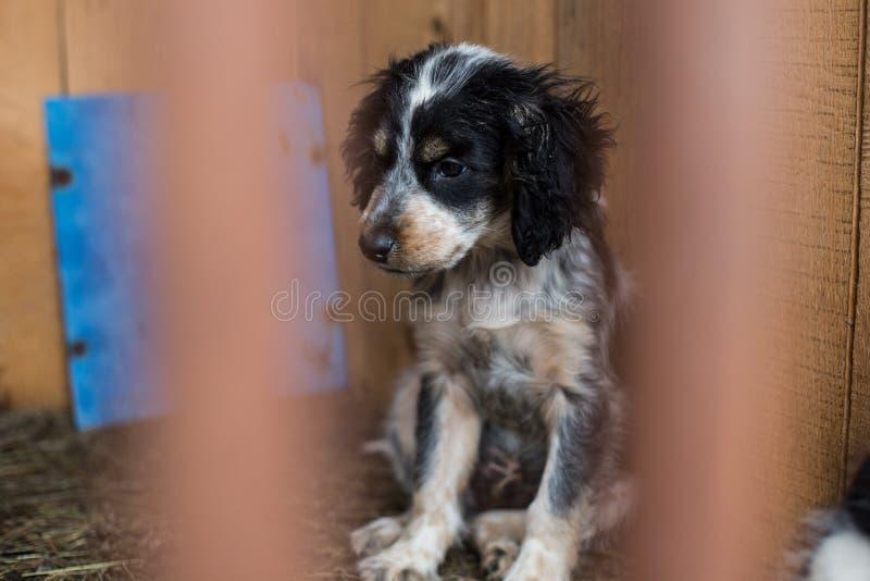 Портрет профиля черно-белого унылого бездомного щенка ждет новый владельца стоковая фотография