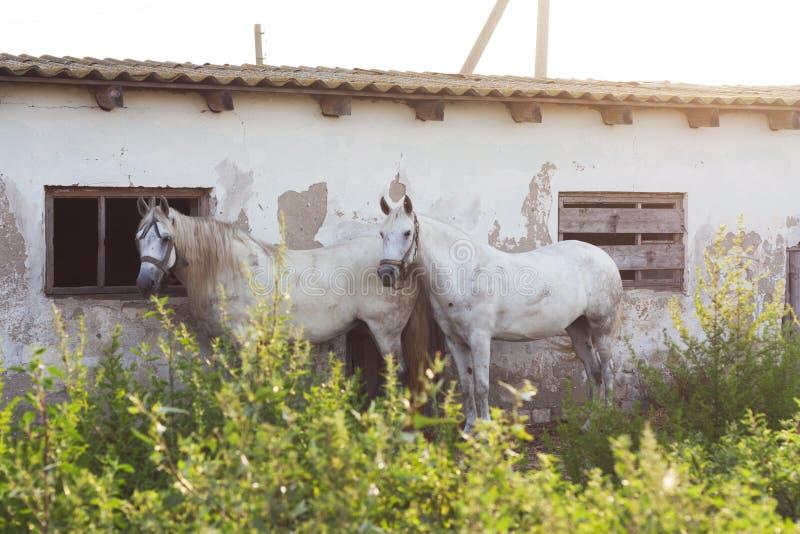 Портрет профиля фото лошадей животный стоковое фото