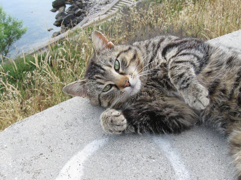 портрет рассеянного серого кота стоковые изображения rf
