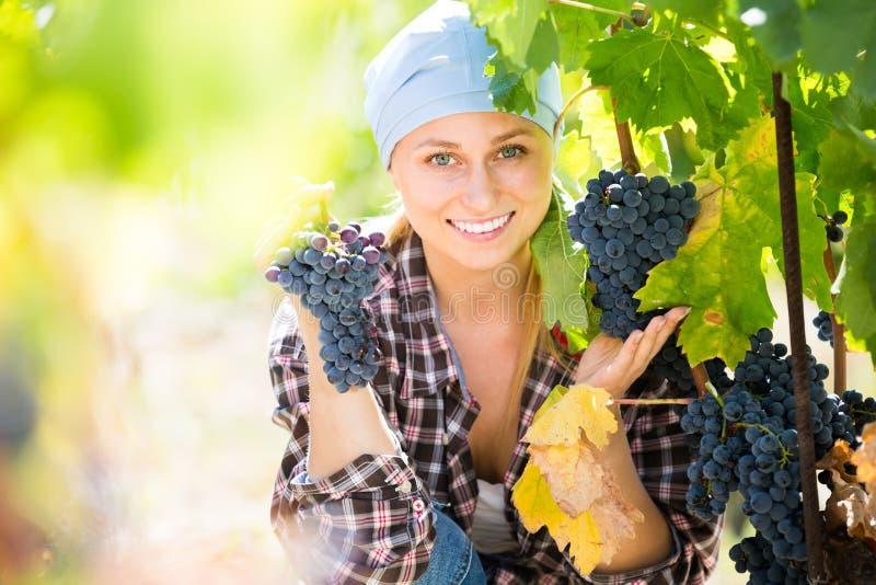 Портрет радостного женского работника на ферме виноградины стоковая фотография