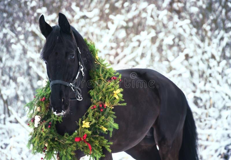 Портрет рождества черной красивой лошади стоковые изображения