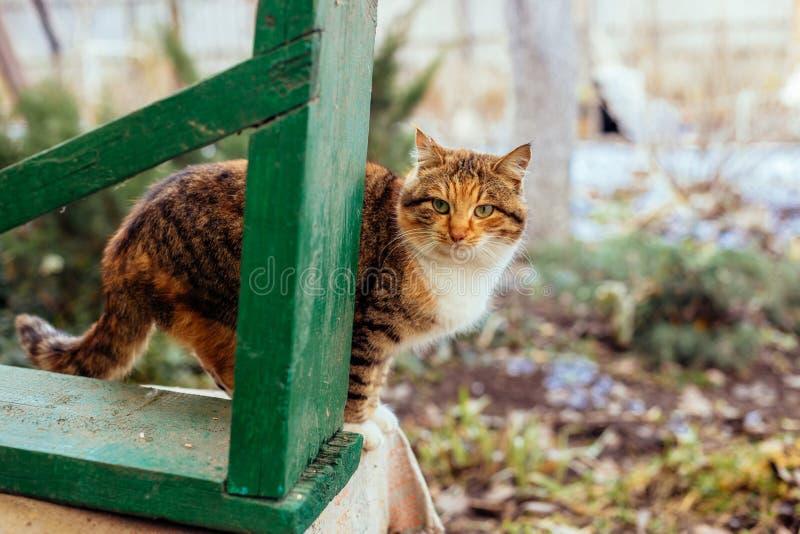 Портрет рыжеволосого сельского кота стоковые изображения