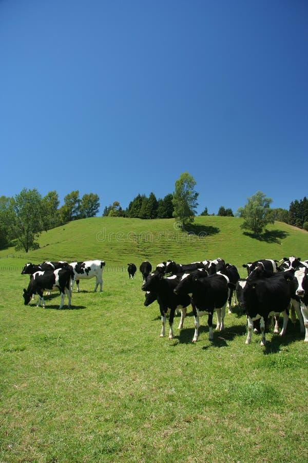 портрет сельскохозяйствення угодье стоковое изображение