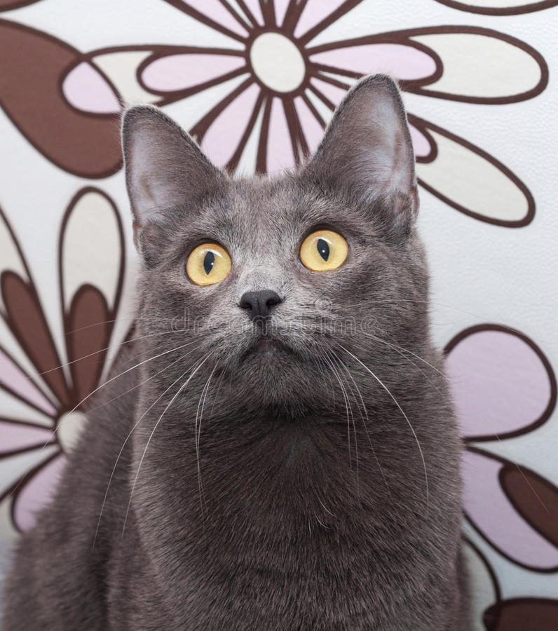 Download Портрет серого кота с желтым цветом наблюдает на Motley Стоковое Фото - изображение насчитывающей мягко, кабель: 40580976