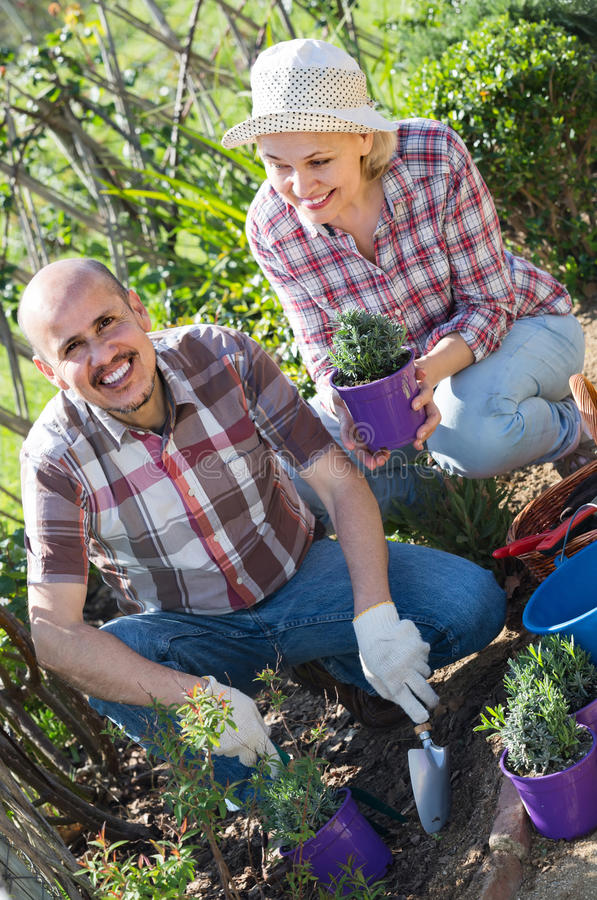 Портрет симпатичной пары позаботить о зеленые растения в g стоковое фото rf