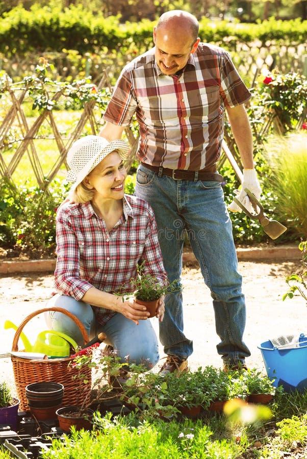 Портрет симпатичной пары позаботить о зеленые растения в g стоковое изображение rf