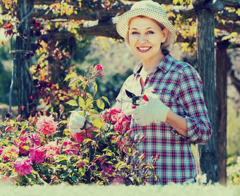 Портрет симпатичной старшей женщины позаботить о розы в g стоковая фотография rf