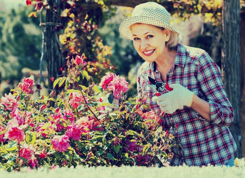 Портрет симпатичной старшей женщины позаботить о розы в g стоковые изображения
