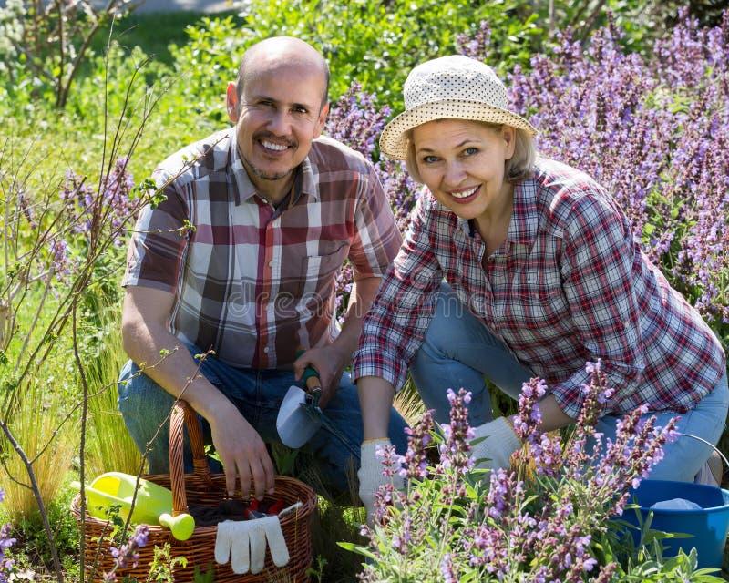 Портрет симпатичной старшей пары принимая заботе зеленых растений i стоковое изображение rf